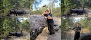 Sackgasse in Australien - ein umgekippter Baum versprerrt die Weiterfahrt