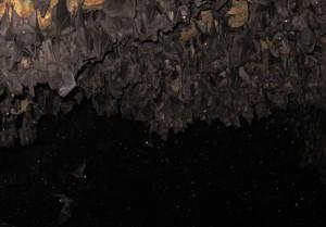 Bali Goa Lowah Tempel Fledermaus Bat