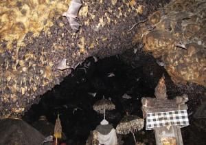 Rundreise auf Bali auf der Weltreise Fledermaus Tempel