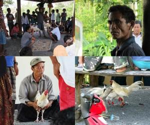 Der traditionelle Hahnenkampf auf der Insel Bali