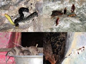 Python Schlangen auf Bali und Untergrund Tempel