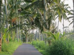 Bali ist einfach wunderschön zum Urlaub machen