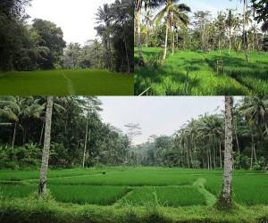 Urlaub auf der wunderschönen Insel Bali