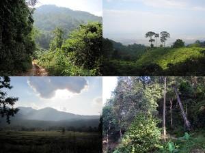 Weltreise Blog diesmal aus der Berglandschaft um Chiang Mai in Thailand