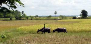 Reisebericht aus Kambodscha in unseren Weltreise Blog