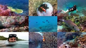 Unterwasser Aufnahmen vom Tauchen am Komodo und Kanawa Insel