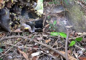 Weltreise Blog Thailand 2011 Koh chang Dschungel Regenwald