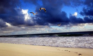 Möwen am Strand in Australien