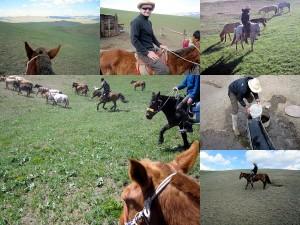 Reiten in der Mongolei Reisebericht 2011