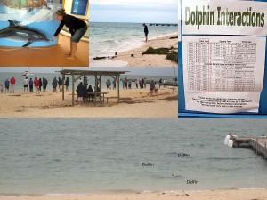 Delfine in Monkey Mia füttern, Erfahrung, Backpacker Reisebericht Weltreise Blog