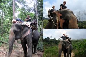 Mit Elefanten in Thailand schwimmen gehen
