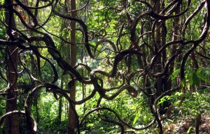 Regenwald auf der Insel Koh Chang in Thailand - Weltreise Blog